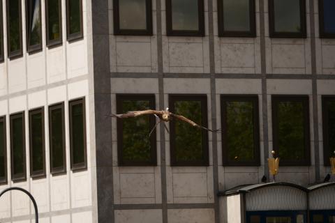Köln von oben erleben - mit der Action Cam Mini von Sony