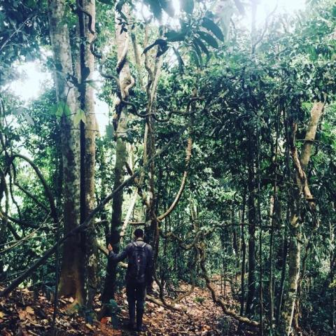 Forest assessment in Malaysian Borneo