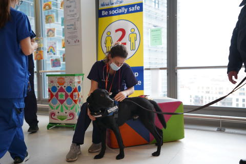 Taskforce's wellbeing dog supports hospital staff