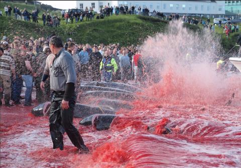 AIDA und Hapag-Lloyd stoppen wegen Walfang Anlandungen auf Färöer-Inseln - WDSF ruft gegenüber TUI Cruises zum Boykott auf