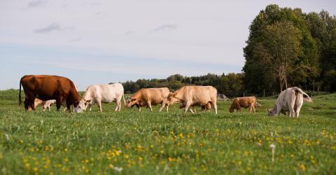 Ekologiskt jordbruk ökar i Sverige