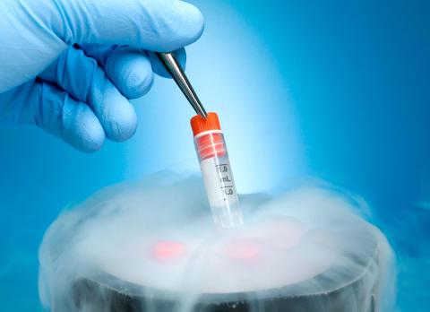 Krankenkassen sollen Konservierung von Ei- und Samenzellen von Krebspatienten bezahlen