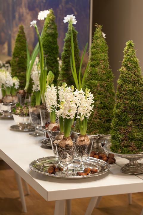 Dukning med hyacinter, mossgranar och tazetter.