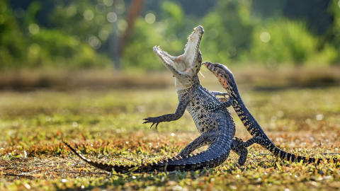 ® Hendy Hendy Mp, Indonesia, Entry, Open, Nature & Wildlife, 2016 Sony World Photography Awards