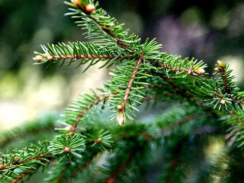 LRF Konsult har förmedlat ett historiskt skogsköp