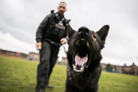Police Dog Chico helps arrest man after Walton burglary