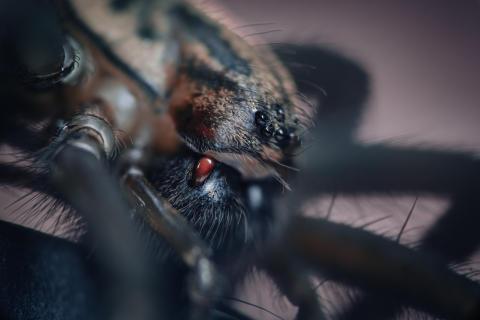 House Spider (2)_A7RII von Sony