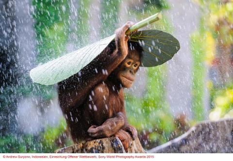 Copyright Andrew Suryono, Indonesien, courtesy of SWPA 2015_01