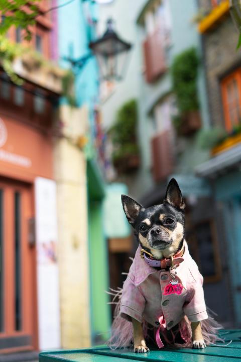 Sony Animal Eye AF_ Dolly Pawton