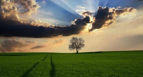 Småföretagares miljömedvetenhet fortsätter minska