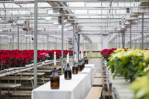 Julstämning i växthuset