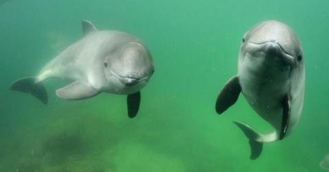 Förslag till förstärkt skydd i marina skyddade områden