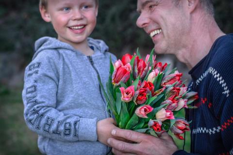 Svenska tulpaner till alla hjärtans dag