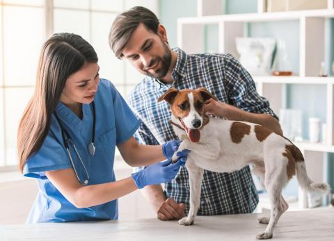 Traumberuf Tierarzt: Zahlen, Daten, Fakten zur Niederlassung