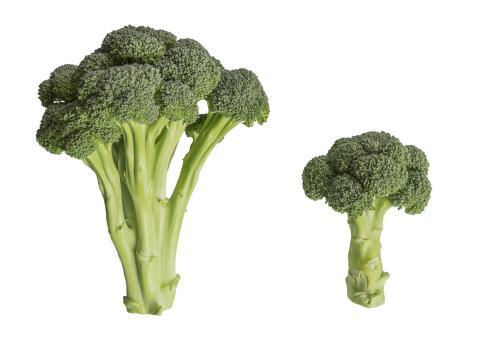 Broccoloco VS vanlig broccoli