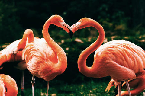 Die Tour d'amour im Zoo Rostock - Am Valentinstag einen amüsanten Blick ins Schlafzimmer der Natur wagen