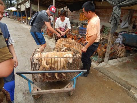 Werden in China wirklich Hunde und Katzen gegessen? Zwei Tierschützer aus Süddeutschland suchten und fanden in der Tierhölle von Guangxi Antworten