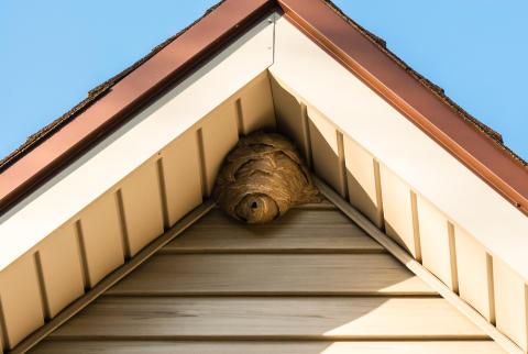 Eingenistet: Wespen, Hornissen und Bienen – Was tun mit ungeliebten gelb-schwarzen Nachbarn?