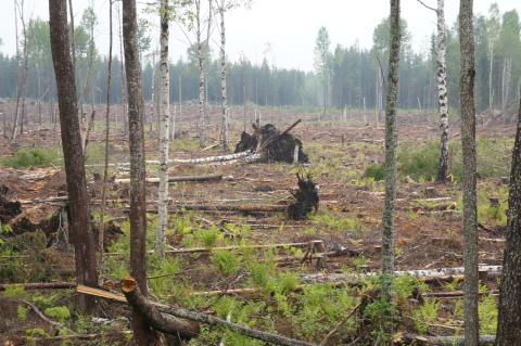 Människans bruk av mark påverkar klimatet mycket mer än vad man trott