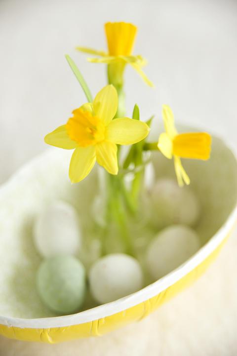 Narcissus 'Tête à Tête' i äggskålen.