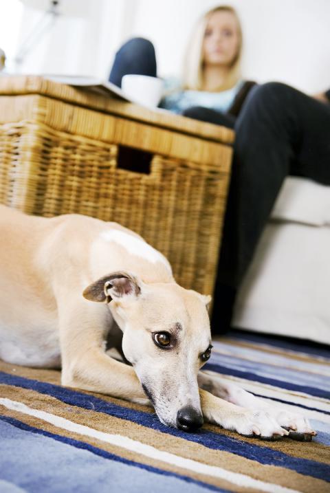 Vilka sällskapsdjur får man egentligen ha hemma?
