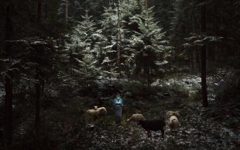 Pasterze, fot. Adam Żądło
