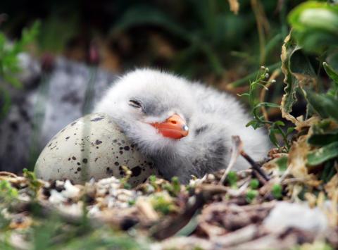 Postkodstiftelsen stödjer Östersjöprojekt om flyttfåglar