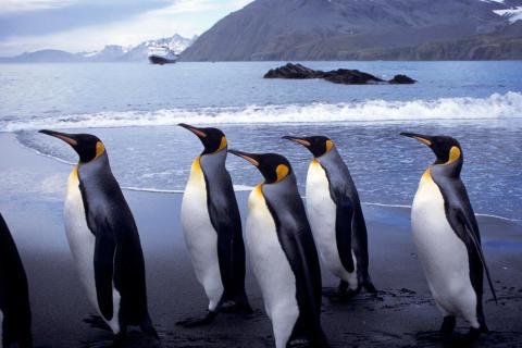 Kronprinsessan och utrikesministern deltar på digitalt Antarktis-symposium