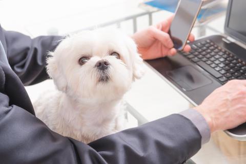 Kontorshotellet World Trade Center Göteborg erbjuder en hel korridor för hyresgäster med hund