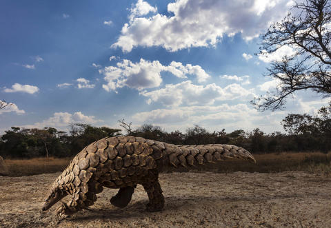 ©  Brent Stirton, South Africa, Category Winner, Professional competition, Natural World & Wildlife, 2020 Sony World Photography Award