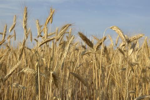 Intresset för svenskt ursprung når även brödhyllan