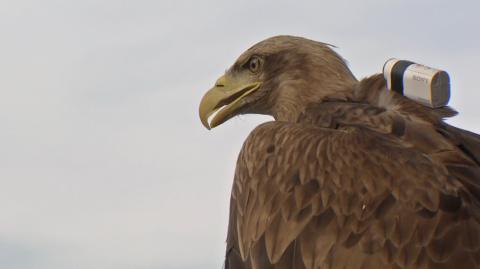 Autentyczny obraz widziany z perspektywy orła