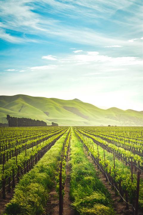 Agriculture verte; comment y parvenir ?