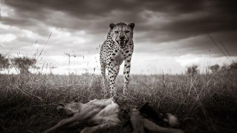 © Graeme Purdy, United Kingdom, 2nd Place, Professional competition, Wildlife _ Nature, Sony World Photography Awards 2021_6
