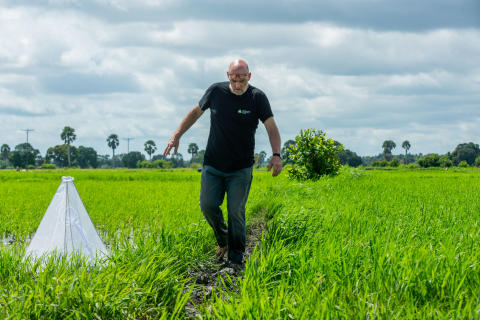Dr Bart Knols inspecting the rice fields for the drones against malaria trial