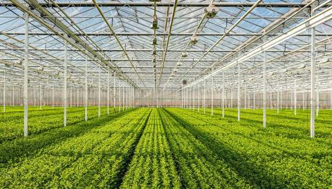 Innovation fund grant to develop next generation microbial solutions for agriculture