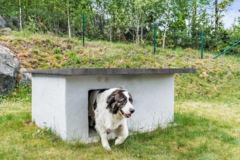 Bygg et isolert hundehus i betong 2