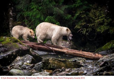 Copyright Kyle Breckenridge, Kanada, courtesy of SWPA 2015