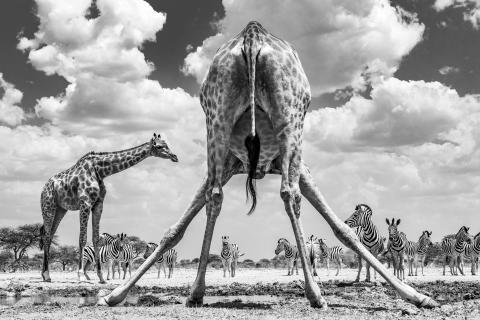 © Marcus Westberg, Sweden, Winner, National Awards, 2020 Sony World Photography Awards.jpg