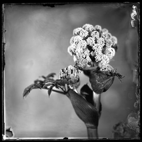 Nederlandse fotograaf Peter Eleveld wint award stilleven Sony World Photography Awards 2021