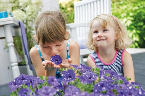 Barnens favorit: Petunia 'Night Sky'