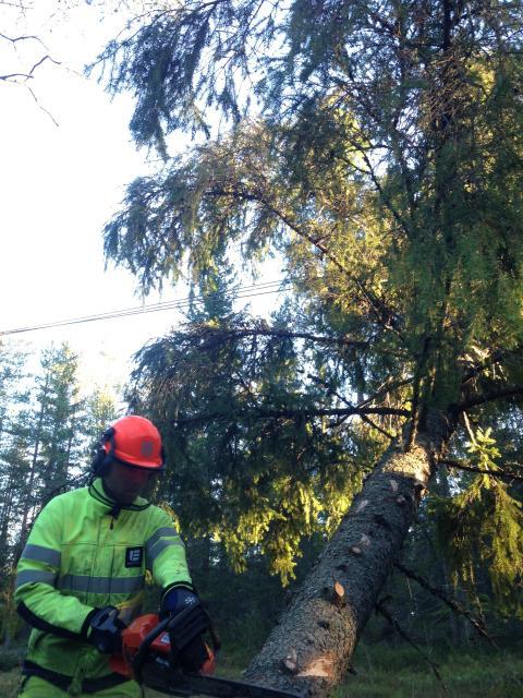 Jon Dorsch på Umeå Energi röjer träd efter stormen Hilde.
