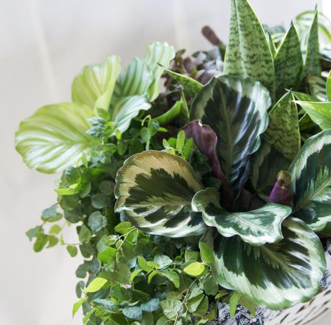 Mixade gröna växter