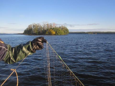 SVU-rapport C_IVL2014-B2214: Miljöstörande ämnen i fisk från Stockholmsregionen 2013 (avlopp och miljö)