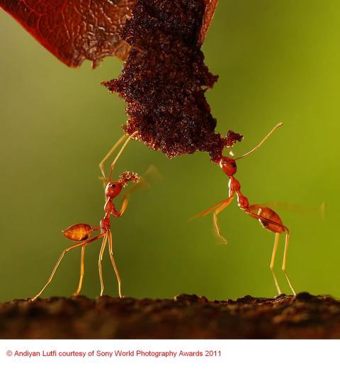 Copyright Andiyan Lutfi courtesy of Sony World Photography Awards 2011