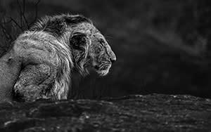 © Amish Chhagan, United Kingdom, entry, Open competition, Natural World & Wildlife, 2021 Sony World Photography Awards