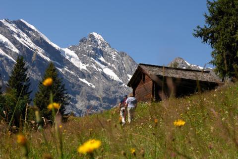 Northface Trail Schilthorn