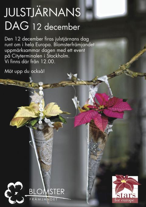 Fira julstjärnans dag med oss!