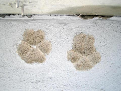 Bygg et isolert hundehus i betong 4