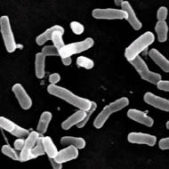 Chr. Hansen's lead on probiotic documentation emphasized with yet another study